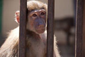 Le coin des singes 2