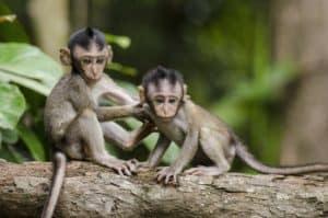 Le coin des singes 3